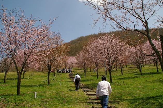 桜峠、福島県北塩原村