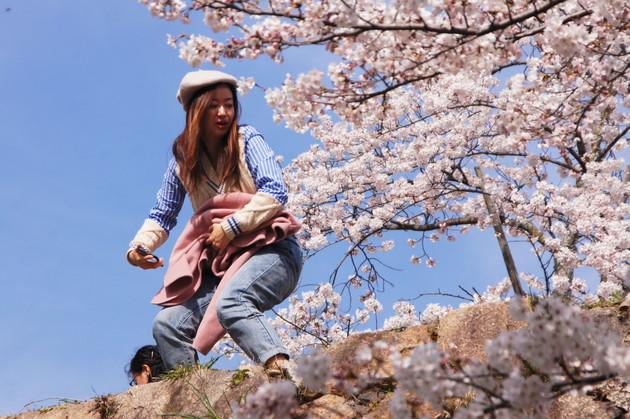 京都市哲学の道