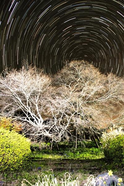 狩宿の下馬桜と星