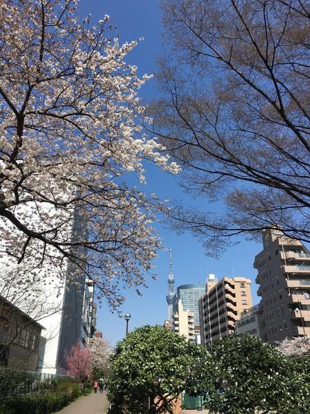 東京都墨田区