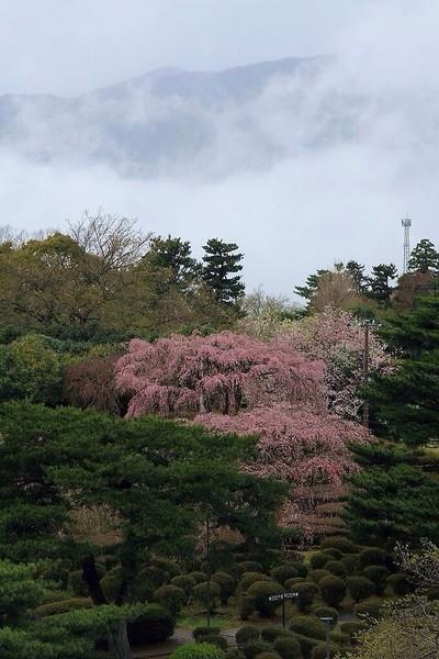 静岡県伊東市   小室山公園