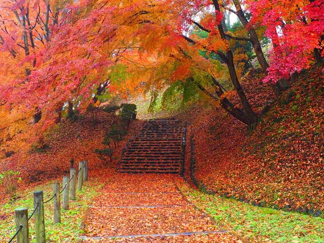 福島県二本松霞ヶ城公園