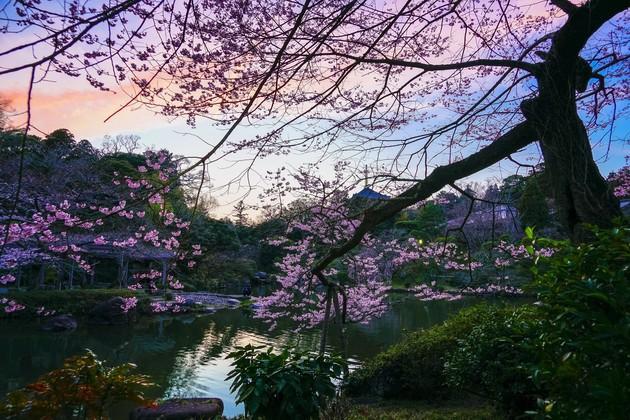 成田山新勝寺公園、成田市