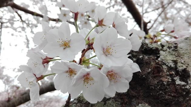 高江西公園 福岡県北九州市八幡西区