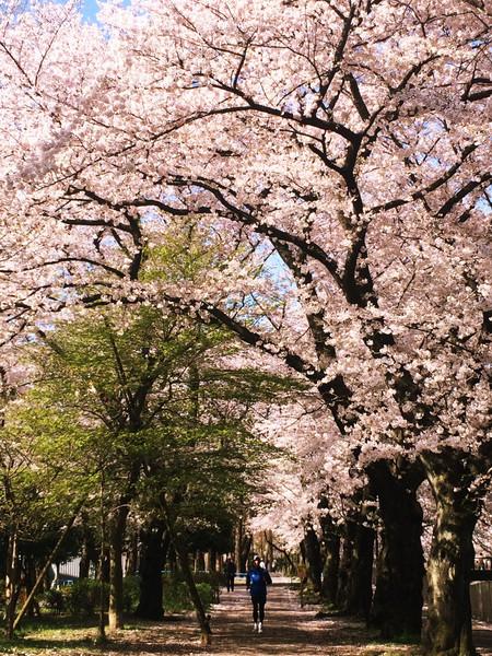 善福寺緑地公園