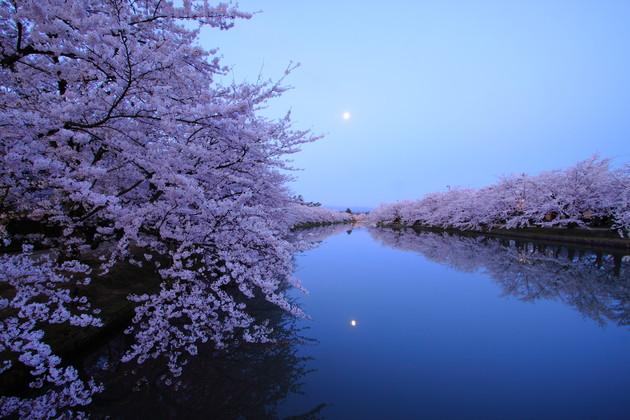 弘前公園 春陽橋上