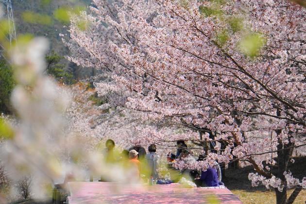 岡山県岡山市 たけべの森公園