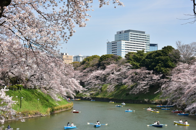 千鳥ヶ渕の桜