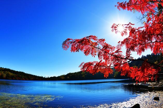 長野県 白駒池