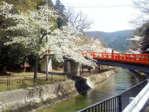 京都 琵琶湖疎水沿い