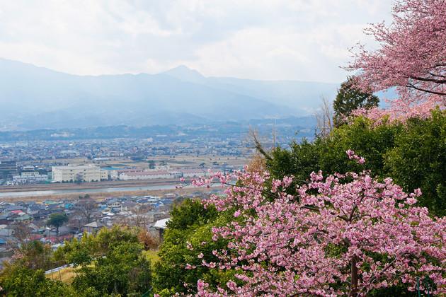 神奈川県松田山