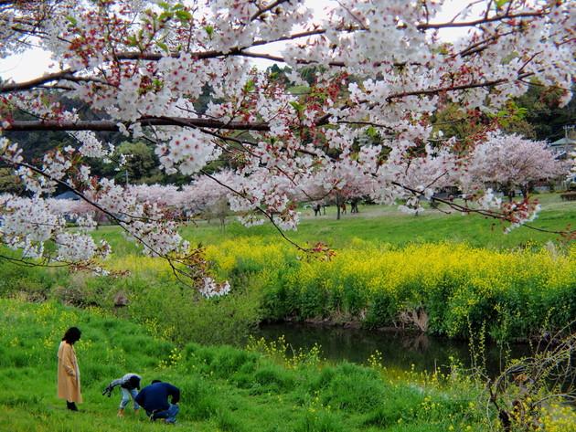 引地川親水公園 神奈川県藤沢市大庭