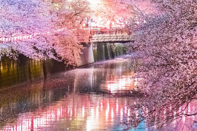 東京都目黒川